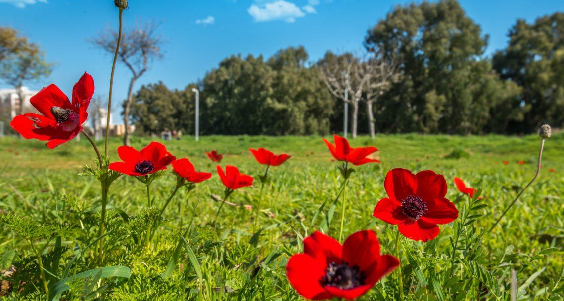 הטבע במלוא הדרו – ממש ליד הבית פה בנתניה