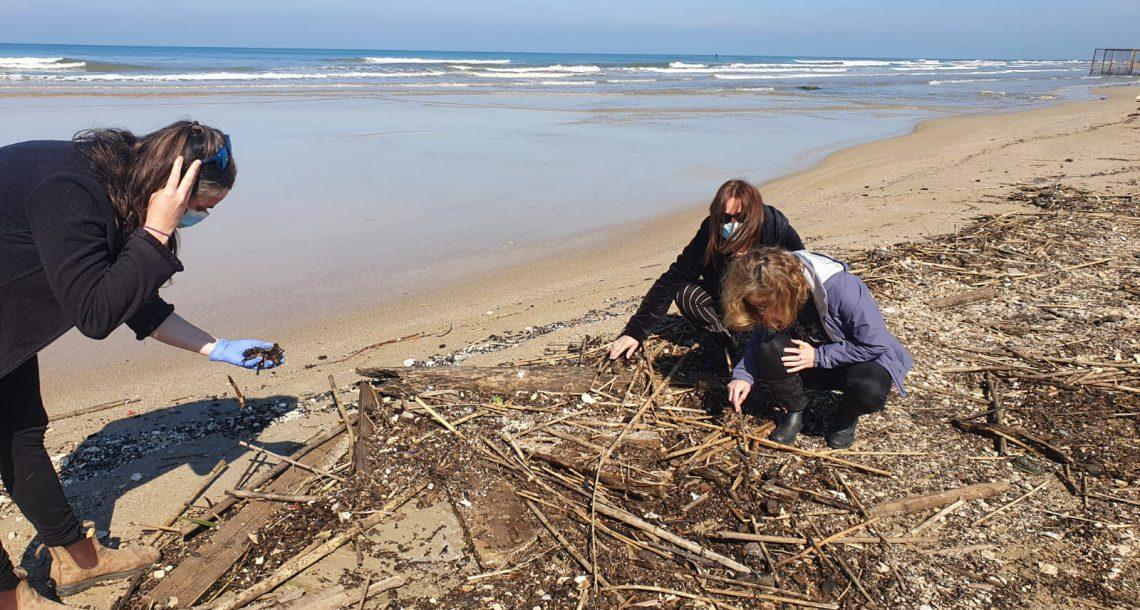 אירוע זיהום הים