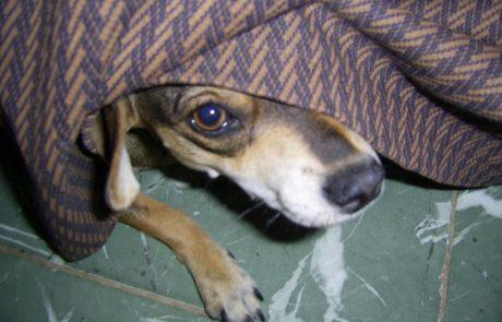 איך שומרים על בעלי החיים בזמן הצפירות וחגיגות העצמאות?