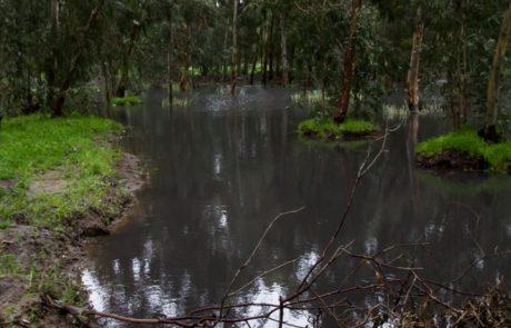 שלולית חורף בחורשת הסרג'נטים – צילומים ביום הסערה
